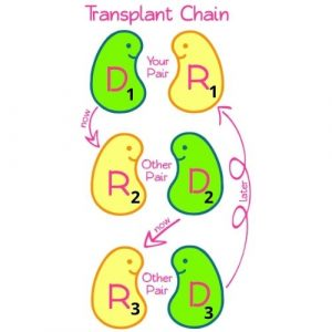 Closed Kidney Donor Chain